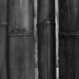 Bambú Caña | Duralmond
